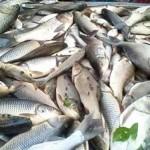 মাছ উৎপাদনে প্রথম হবে বাংলাদেশ