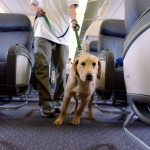 Airlines can't ban service animals by breed